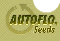 autoflo cannabis seed