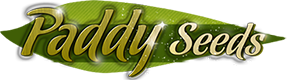 PADDYSEEDS | cannabis seeds